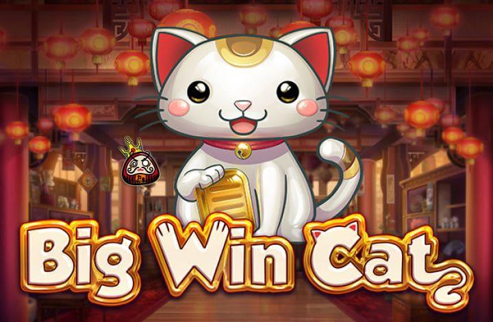 Big Cat Win 注目の画像